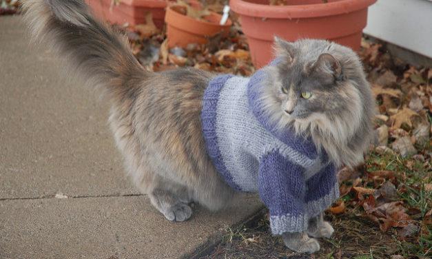Knit a Cat Hoodie, Pattern By Kristin Roach