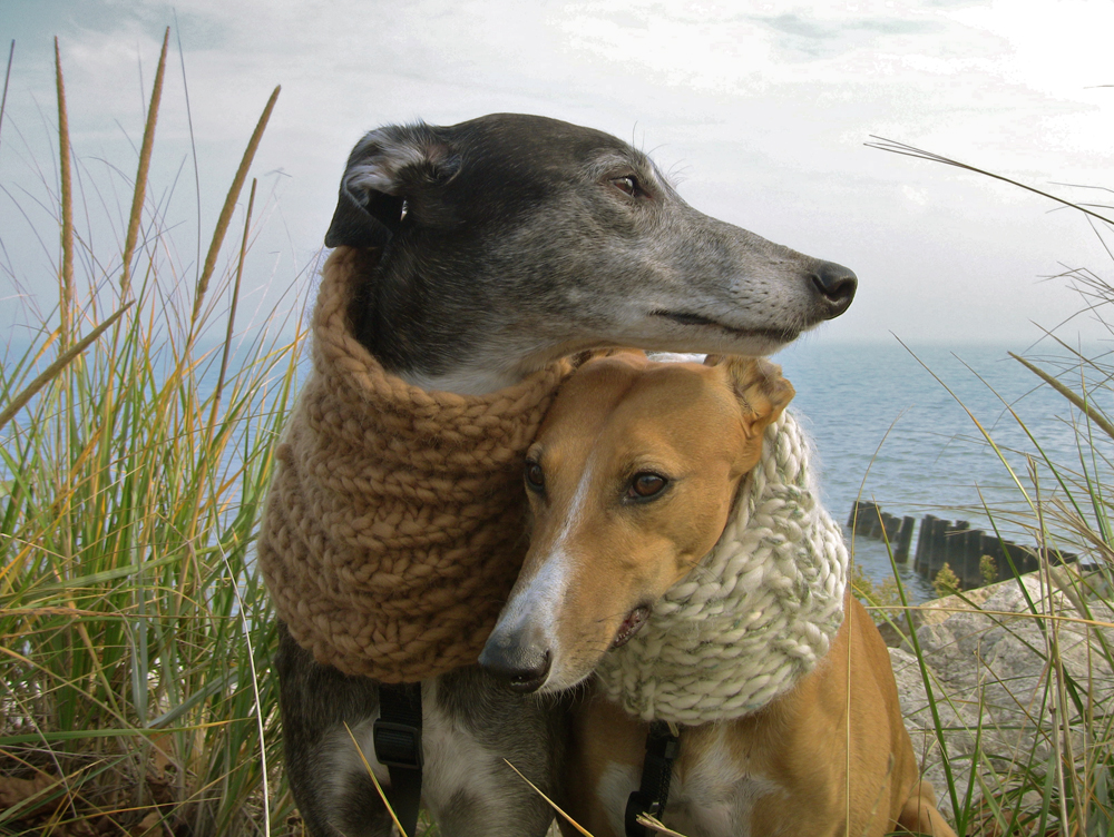 Gorgeous Greyhounds In Knit Snoods!