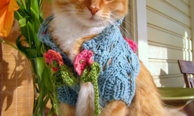 See This Cat in a Shrug? It's Paws-itively Brilliant …