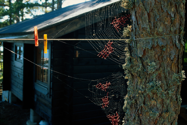 She Tried Mending Spiderwebs With Yarn ...