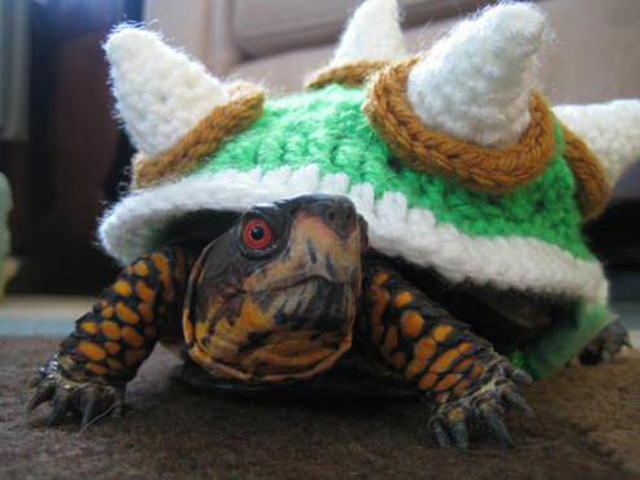 Turn Your Turtle Into a Beastly King Koopa