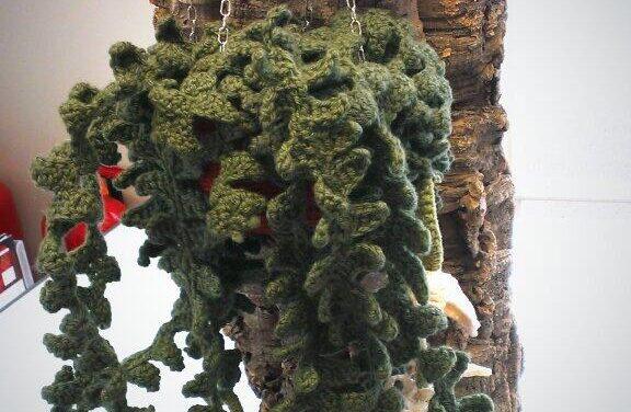 """epiphyllum onguliger aka the """"fishbone cactus"""""""