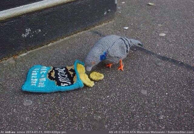 10 of the Most Perfect Pigeons in Knit & Crochet