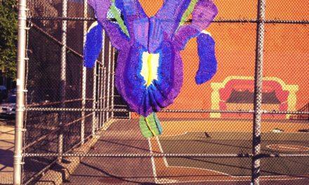 Naomi's Wild Iris Yarn Bomb in East Harlem, NYC