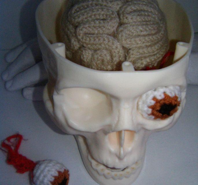Crochet Brain & Eyeball, Set Inside Replica Skull – Creative!