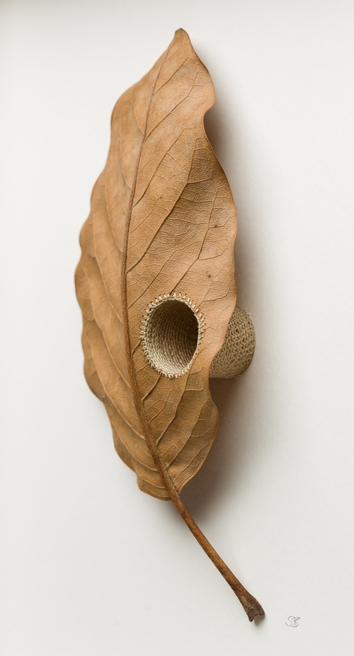 Susanna Bauer Creates Spectacular Sculptures Using Leaves, Crochet and Concentration