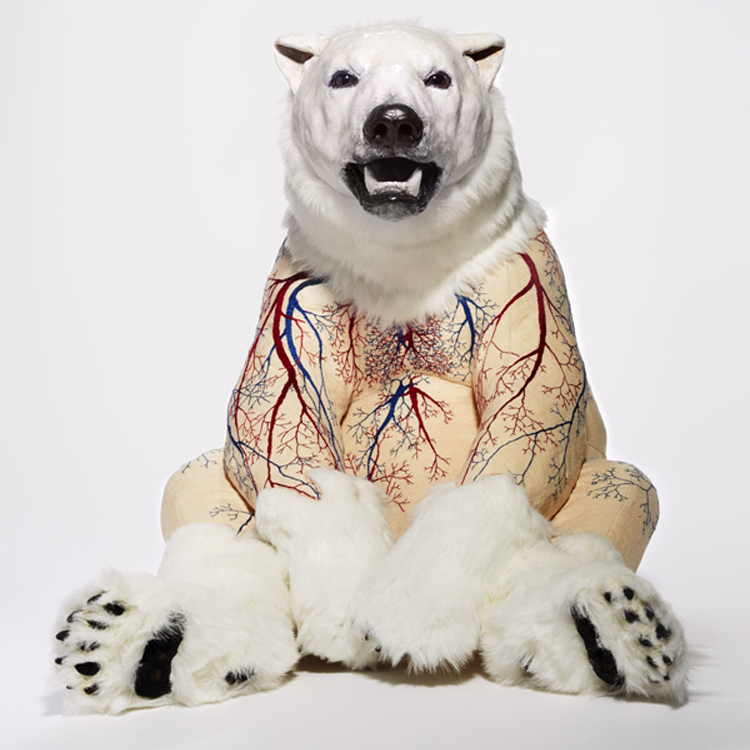 polar_DeborahSimon