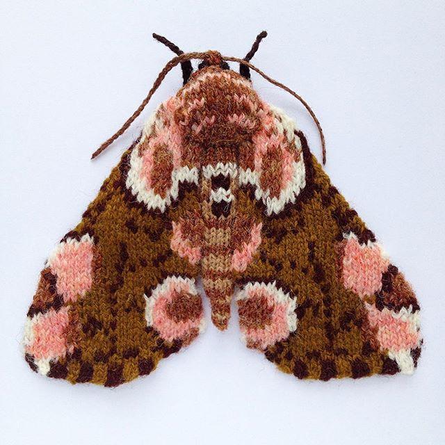 Peach Blossom Moth by Max Alexander