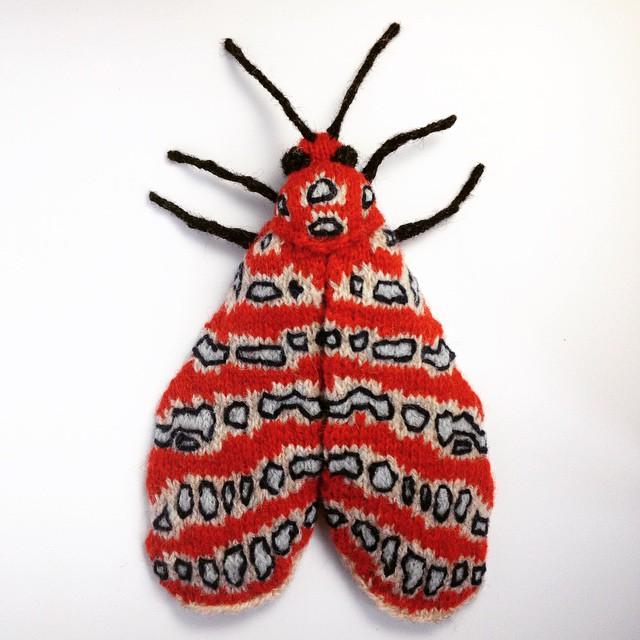Tatargina Picta Moth by Max Alexander