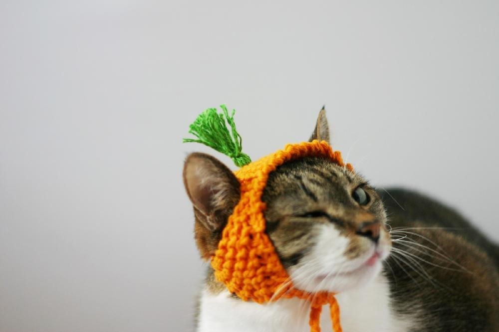Carrot Cat Hat Pattern by Sara Thomas