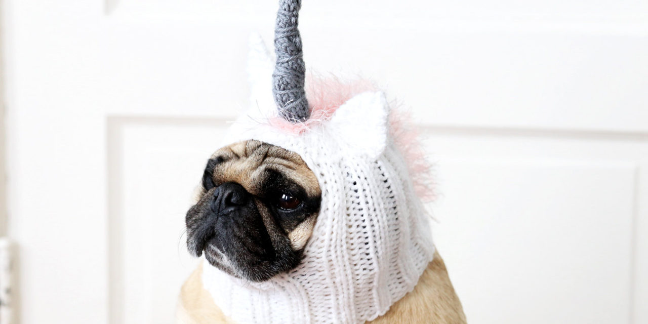 Pug Life Is Too Real. Time To Be A Unicorn.