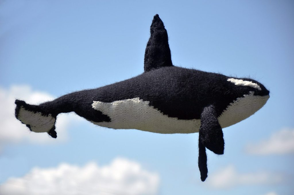 bfc7c89aa1a Then She Knit an Orca and You ll Agree
