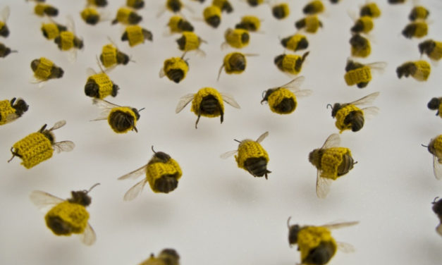 Dead Bees in Crochet Sleeves – the Futility of Bandages and the Elevation to Art