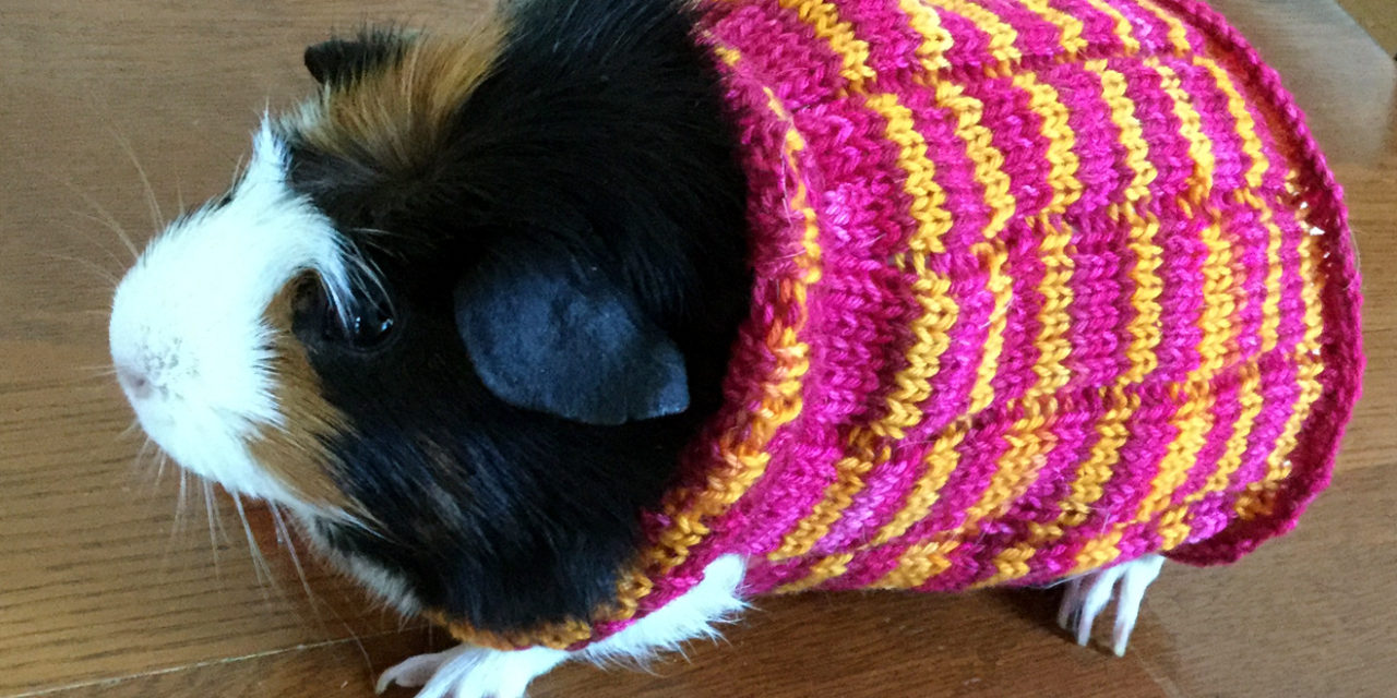 Knitting a Guinea Pig Sweater With Bis-sock Yarn From Biscotte Yarns. KnitH...