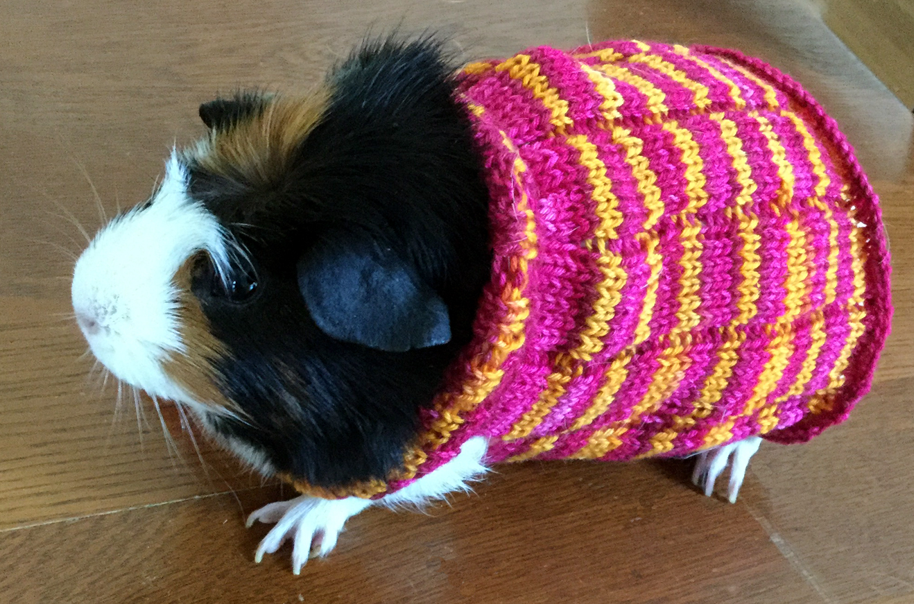Amigurumi Guinea Pig : Knitting a guinea pig sweater with bis sock yarn from biscotte