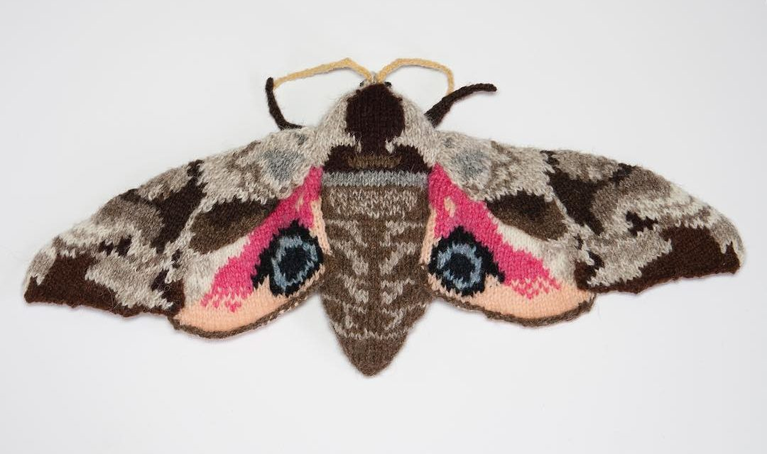 New Knitted Moths By Max Alexander – Stunning Must-See Creativity!