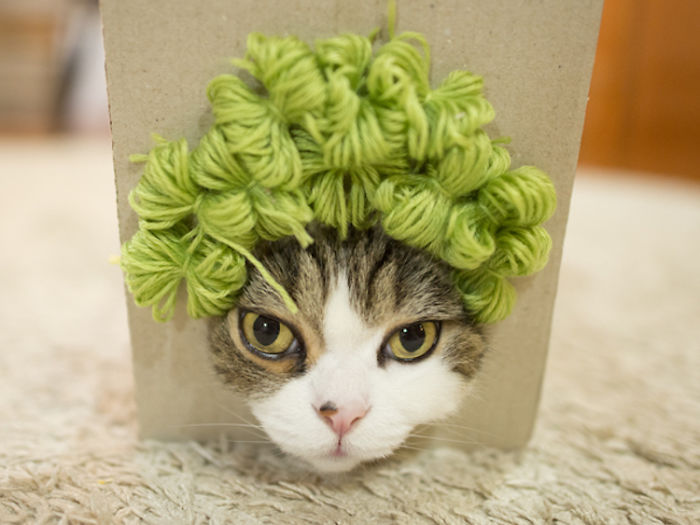 How To Successfully Trick a Cat Into Wearing Whimsical Wigs Made From Yarn