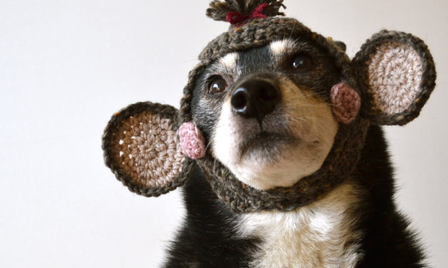 Finn's Pick: The Monkey Did It! Doggy Cosplay Done Right!