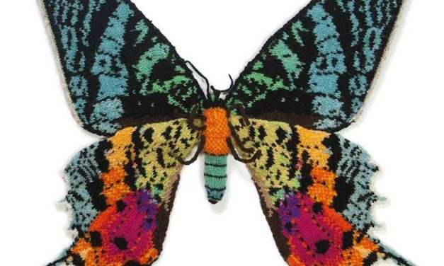 Max Alexander's Knitted Madagascan Sunset Moth