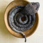 Knit a Slithery Striped Stockinette Snake – FREE Pattern!