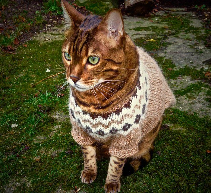 Internet-Famous Cat Zigsa Looks Super-Chill in His Icelandic Sweater