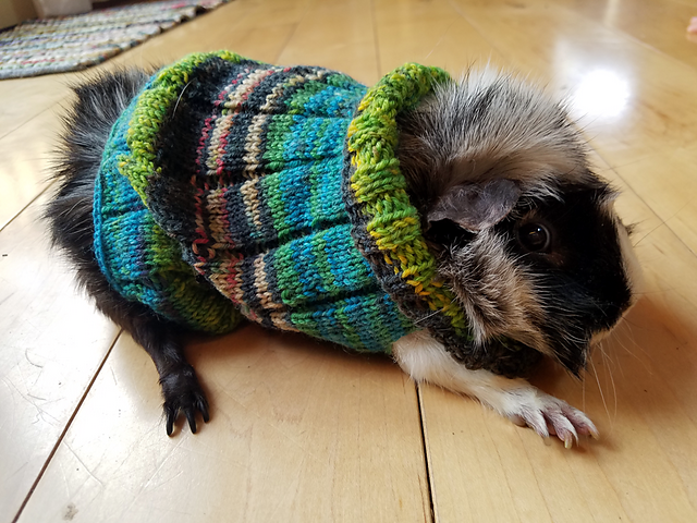 Knit an Easy Guinea Pig Sweater With My Latest Pattern!