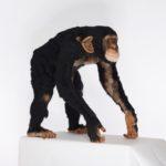 Watch This Amazing Time-Lapse Video of Kiyoshi Mino Needle-Felting a Life-Sized Chimpanzee