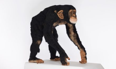 Watch This Amazing Time-Lapse Video of Kiyoshi Mino Needle-Felting a Life-Sized Chimpanzee