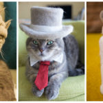 Meet The World's Most Renowned Fallen Fur Felted Hat Designer For Cats!