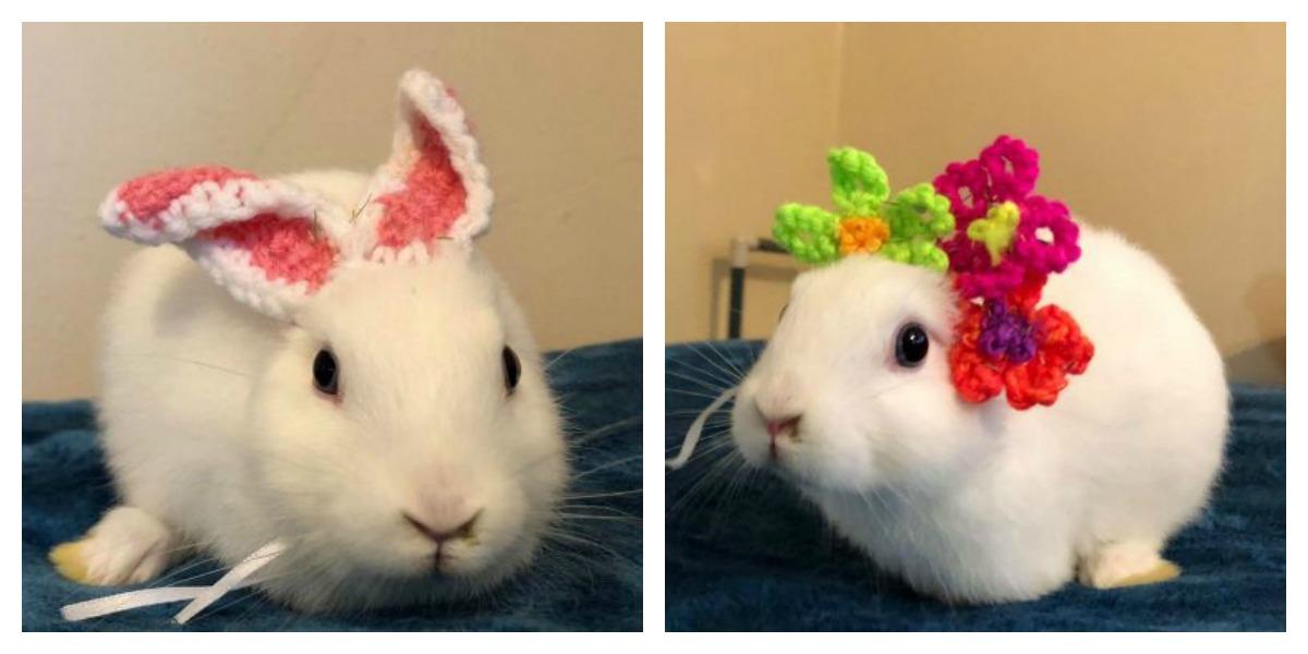 Mimi The Earless, Three-Legged Bunny Has Her Look Lovingly Transformed With Crochet