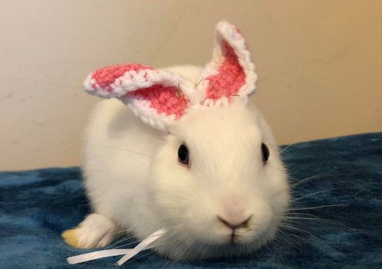 Mimi The Earless Bunny Has Her Look Transformed With Crochet