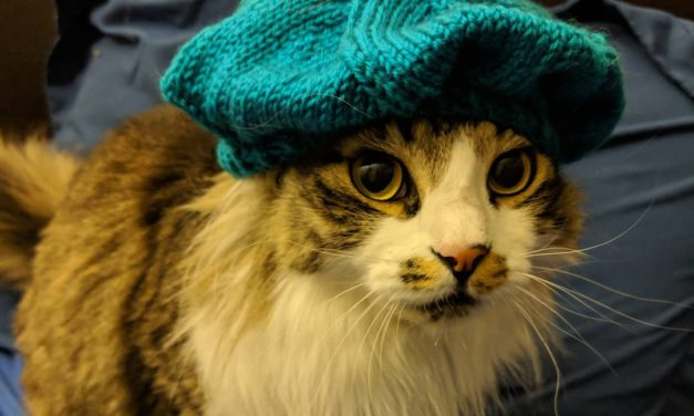 Oh Nothing, Just a Cat in a Knitted Beret …