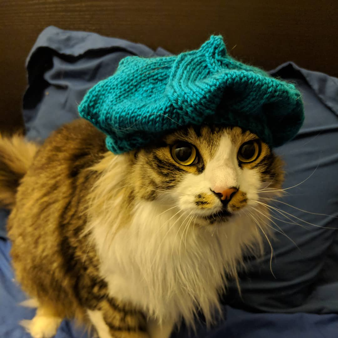 Oh Nothing, Just a Cat in a Knitted Beret ...