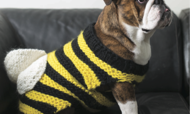 Knit a Bumbledog Costume for a Furry Friend, 'Cause Doggy Cosplay is for Anytime of Year!