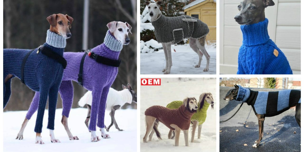 Six Times Greyhounds Wore Sweaters Better Than You
