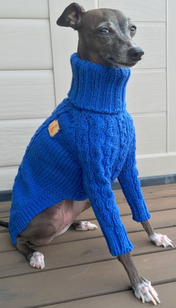 Six Times Greyhounds Wore Sweaters and Looked Better Than You