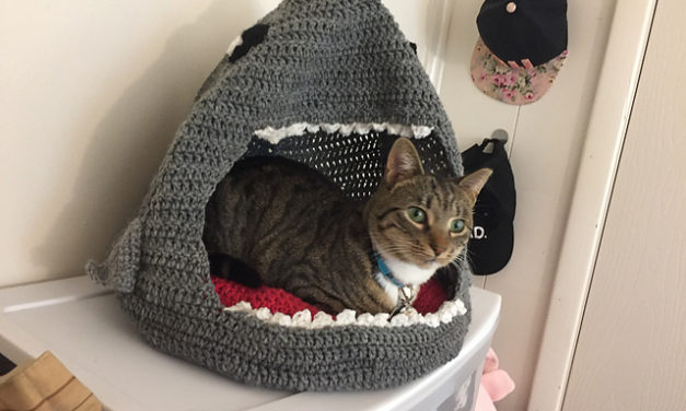 Crochet a Sharky Cat Cave, Designed By Beck Liberatore