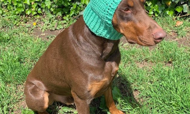 Crochet a Dinosaur Snood For Doggy Cosplay Fun