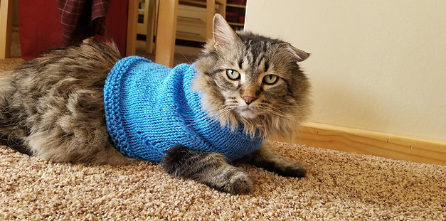 Everyday Can Be Caturday When You Knit a Dapper Blue Cat Sweater!