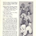 Crochet a Yankee-Poodle-Dandy … Free Vintage Pattern Alert!