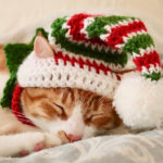 Crochet a Christmas Elf Hat for Cats