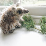 Knit a Handsome Hedgehog With This Terrific New Pattern From Claire Garland