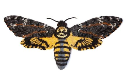 Knitted Death's Head Hawk Moth By Max Alexander … It's Stunning!