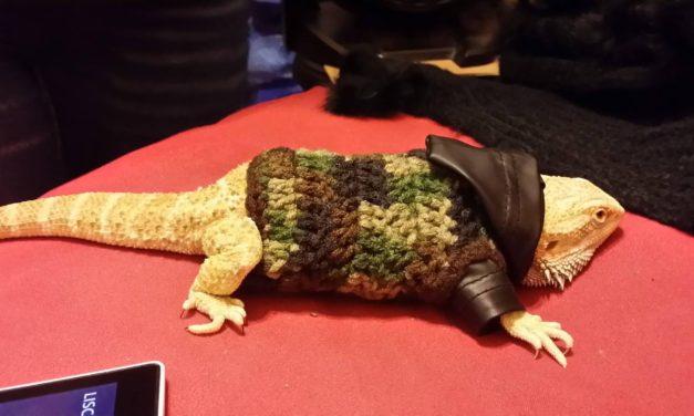 Dexter The Bearded Dragon Looks Dapper In His Crochet Hoodie … Handmade With LOVE!