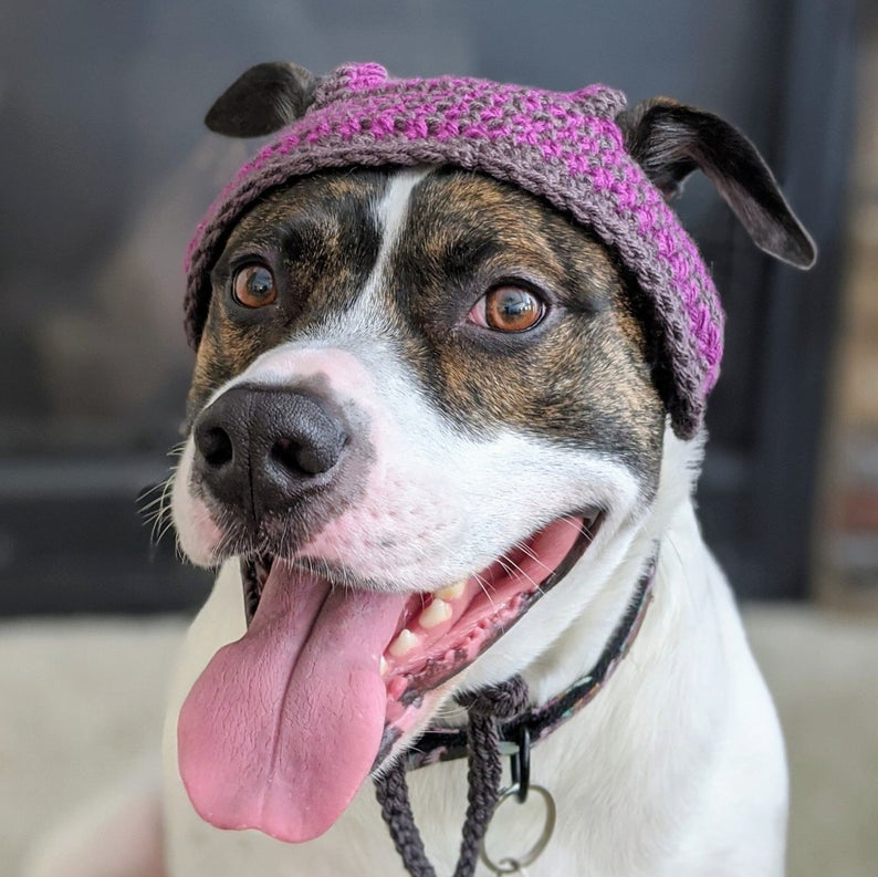 Crochet a BamBam Pup Hat, This Is The Best Dog Hat Ever!