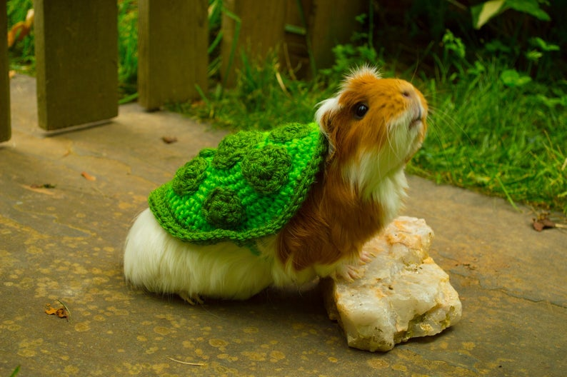 Your Guinea Pigs Called, They Want You To Crochet Them This Turtle Cosplay
