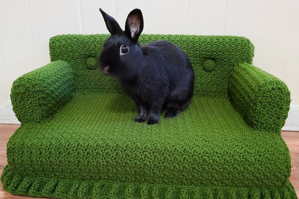Who Says This Crochet Cat Couch Can't Moonlight As A Rabbit Sofa For A Cute House Bunny? Not This Gal …