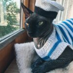 Knit a Sassy Sailor Cosplay Outfit For Your Kitty-Cat