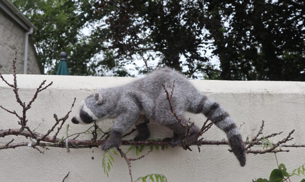 Knit a Trash Panda! Get Started On This Life-Like Raccoon Pattern, Designed By Claire Garland