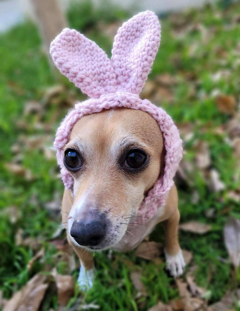 The Time Is Right To Crochet A Dog Bunny Snood Designed By Hello Gabby